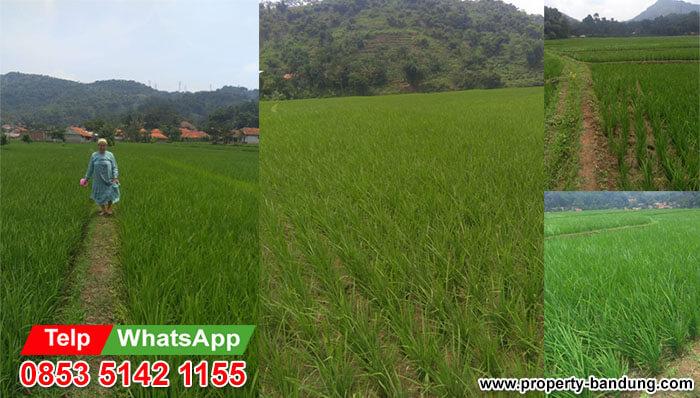 Dijual Cepat Tanah Sawah di Cipatik Bandung Barat